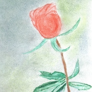 Red_rose_slight_pastel_background_card