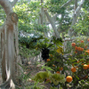 1427-coconut_grove_backyard_thumb