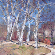 Birch_tree__18x24_card