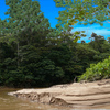 1464-thick_brazilian_riverside_woods_thumb