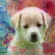 Puppy_love2_card