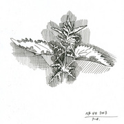 2007-foliage_of_nettle_card