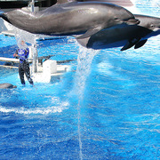 Seaworld_jumpin_card