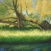 Fallen_willow_at_thurlby_and_baston_fen_card