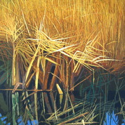 Fen_reeds_card