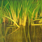 Reed_base_at_deeping_lakes_-_oil_card