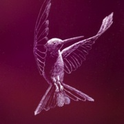 Hummingbird_scratboard_card