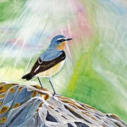 Wheatear_card