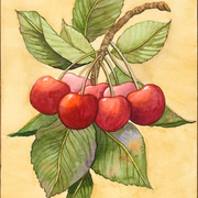 Cherries_web_card