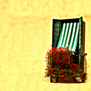 Venice_window_with_flowers_card