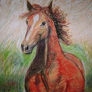 The_wild_horse_card