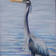 Greatblueheron_card