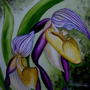 Paphiopedilum_philipinense_card