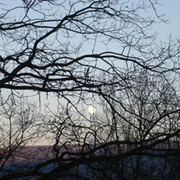 Moon_through_branches_card