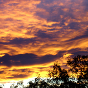 Halloween_sunrise_-_2009_card
