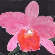 Orchid__3-11-10_card