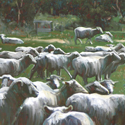 New_zealand_sheep_card