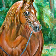 Arabianhorse_card