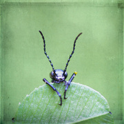 Bug_on_leaf_processed_card