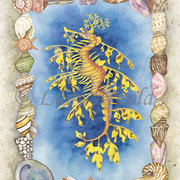 Leafy-sea-dragon-lg_card