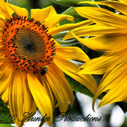 Nature_011_fhdr__medium__card