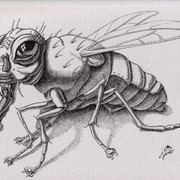 The_fly__23_x_30sm_ink__paper_card