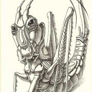 Gallant_grasshopper__23_x_30sm_ink__paper_card