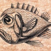 The_fish__20_x_30sm_ink__paper_card