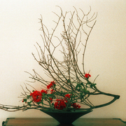 Ikebana-027_card