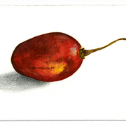 Tamarillo_card