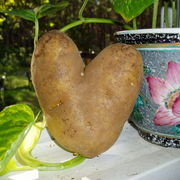 Potato_love_006_card