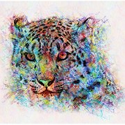 Tigercolor_web_card