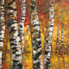 Birch_trees_in_golden_fall_2_thumb