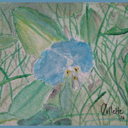 Img_5981_clear_wild_flower___border_card