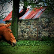 Horseshed_card