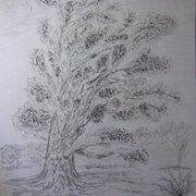 Langley_park_tree_no