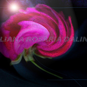 Arte_digital_rosa_de_galicia_con_sello_card