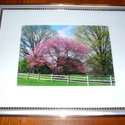 Pink_tree_fence_card