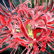 Red-flowers-painting_card