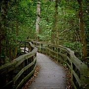Congaree_boardwalk_1_card