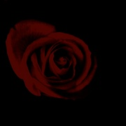 Dark_rose_card