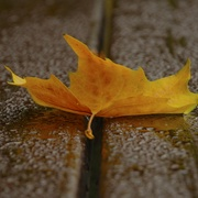 Autumn_leaf_card