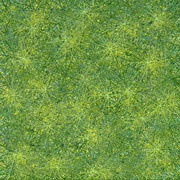Green_starscape_2010_13x13-web_card