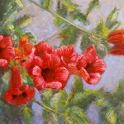 Red_trumpet_flowers_card