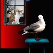 Catandbird_card