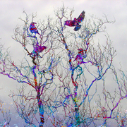 Birds_in_tree_web_card