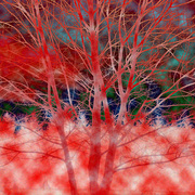 Red_tree_card