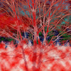 Red_tree_thumb