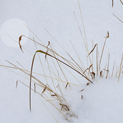 Winter_grass_card