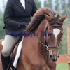 Dressage_thumb